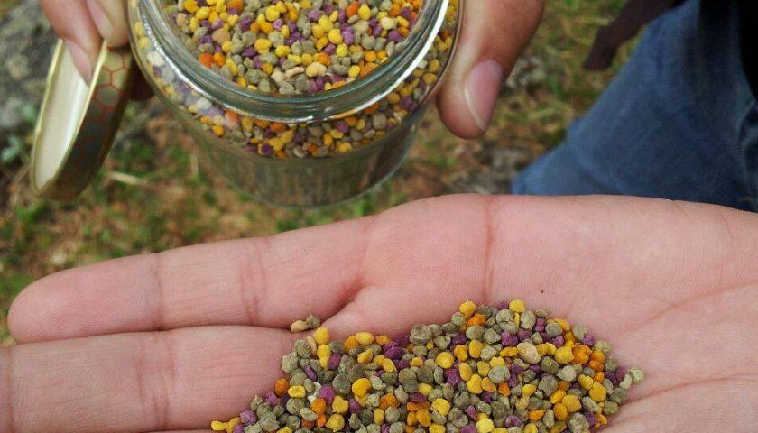 Polen de abeja extendido en una mano con su cariz multicolor